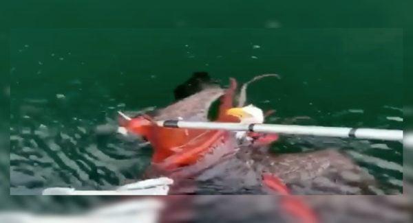 Eagle vs Octopus