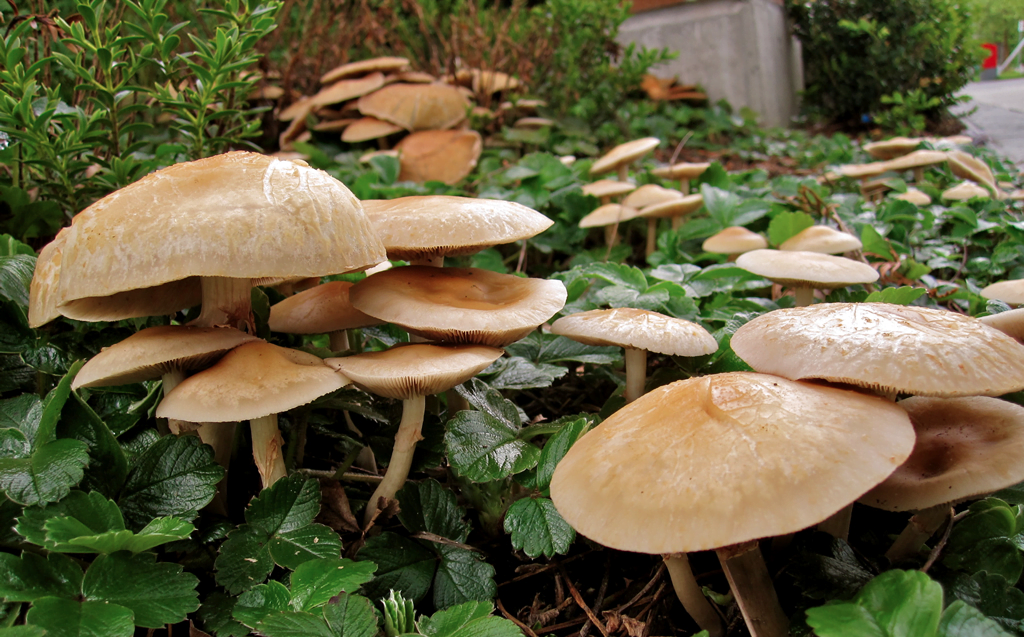 NASA to make mushroom homes