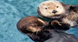 This Vancouver Aquarium Otter Makes the Most of Our Snow Days (VIDEO)