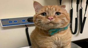 BenBen Saddest Cat