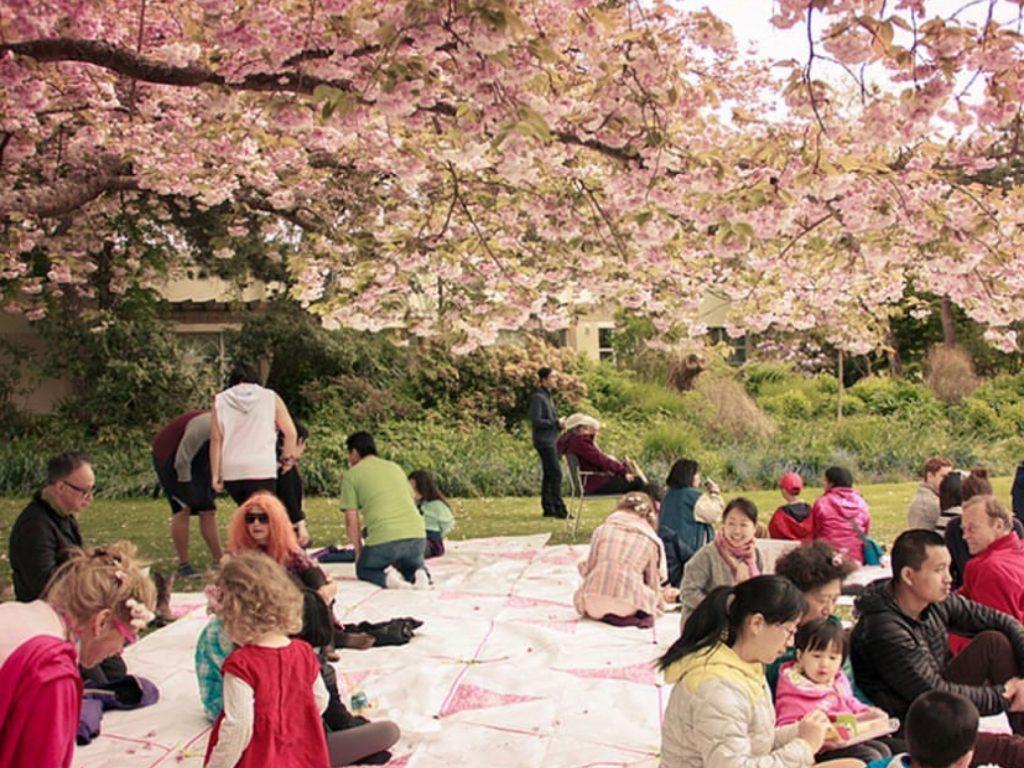 Cherry Blossom Fest-picnic