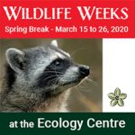 Ecology Centre: Our Wild Neighbours 2020