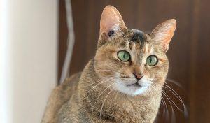 news-journey-cat-update adoption