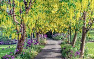 VanDusen Botanical Garden To Reopen To The Public This Week