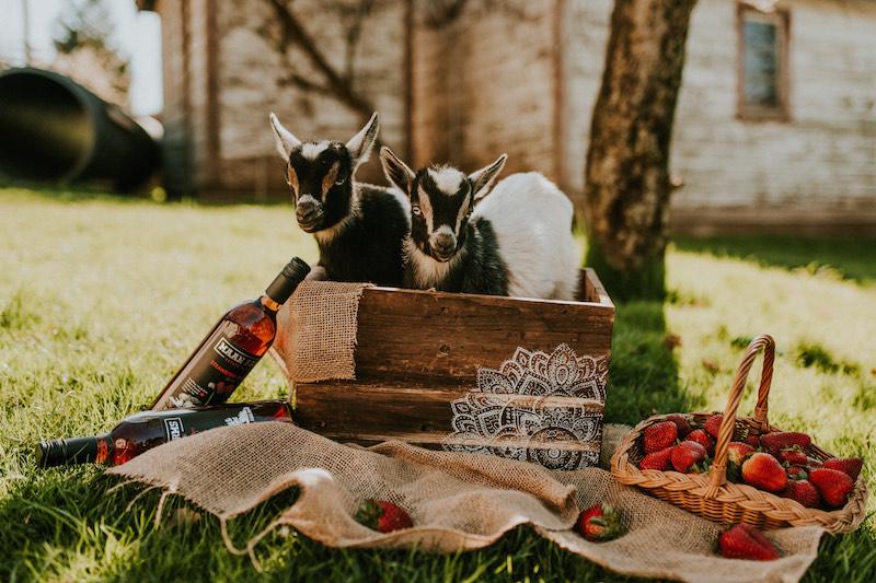 Maan Farms 1.'