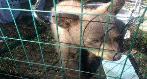 BC police seize bear