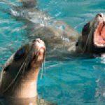 Vancouver Aquarium Extended Hours 2020