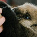 Visit Joey, the Otter Pup: Vancouver Aquarium 2020