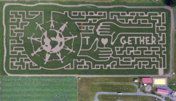 Chilliwack Corn Maze