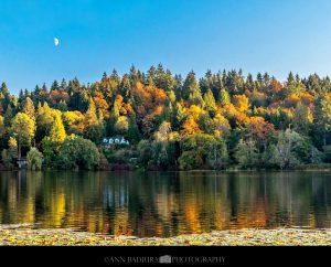 fall foliage metro vancouver