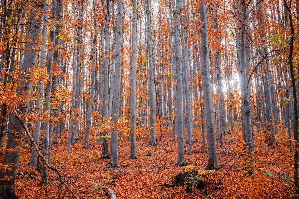fall foliage in bc