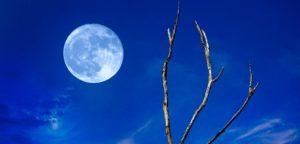 Hunter's Blue Moon