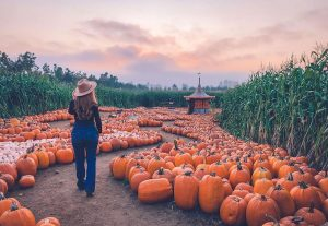 pumpkin patches in metro vancouver