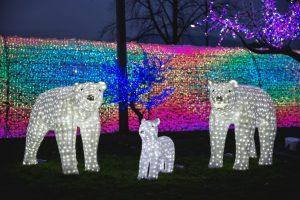 playland winter lights