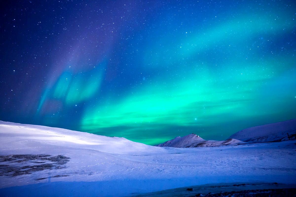 science world exhibit arctic voices polar bears