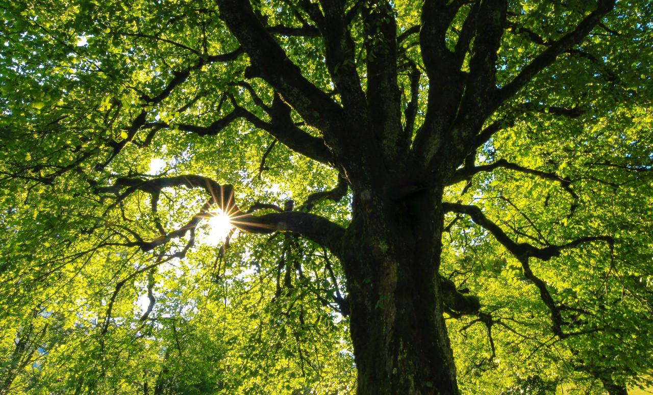 new west tree sale