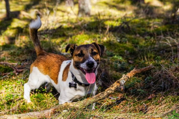 dog parks in metro vancouver