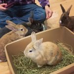 Vancouver's First Bunny Café is Opening This Spring