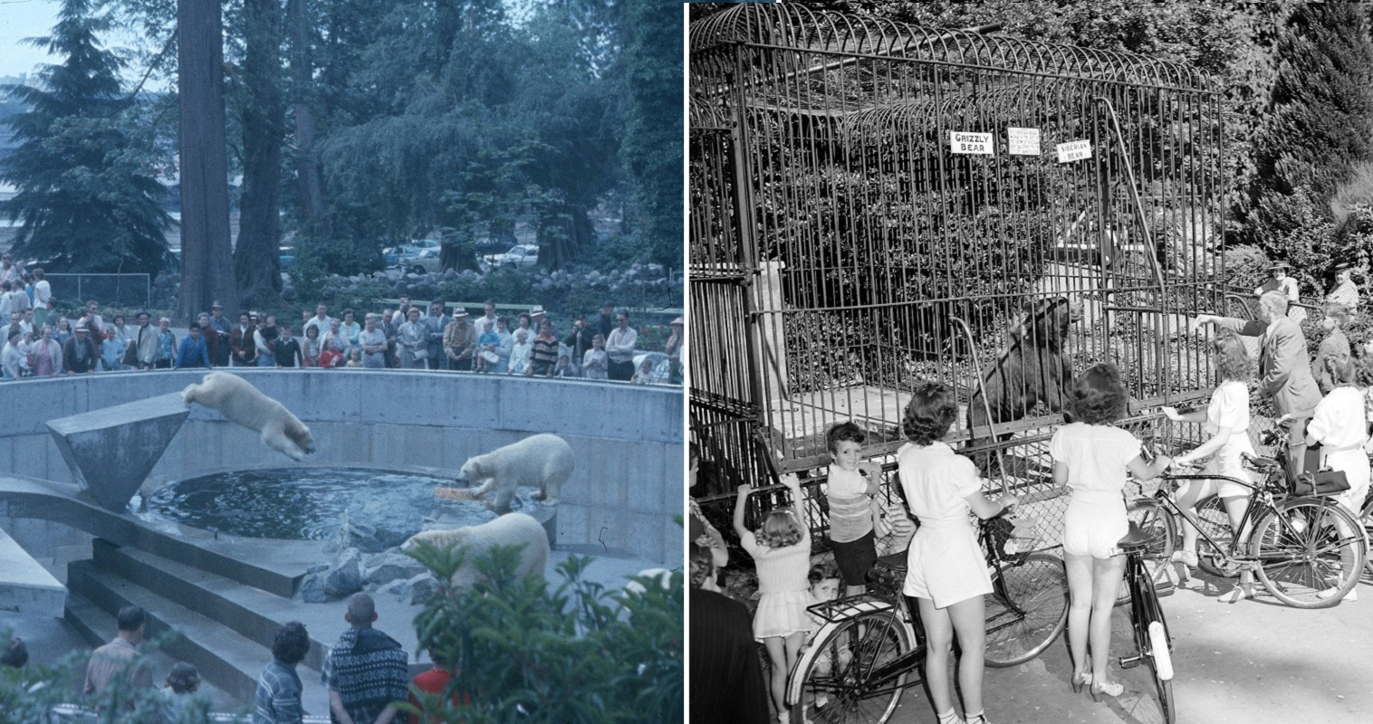 Stanley Park Once Had A Zoo And Here's What It Was Like