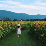 Massive Sunflower Festival Returns This Summer With Over 5 Acres of Full Blooms
