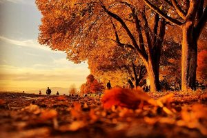 fall vancouver things to do