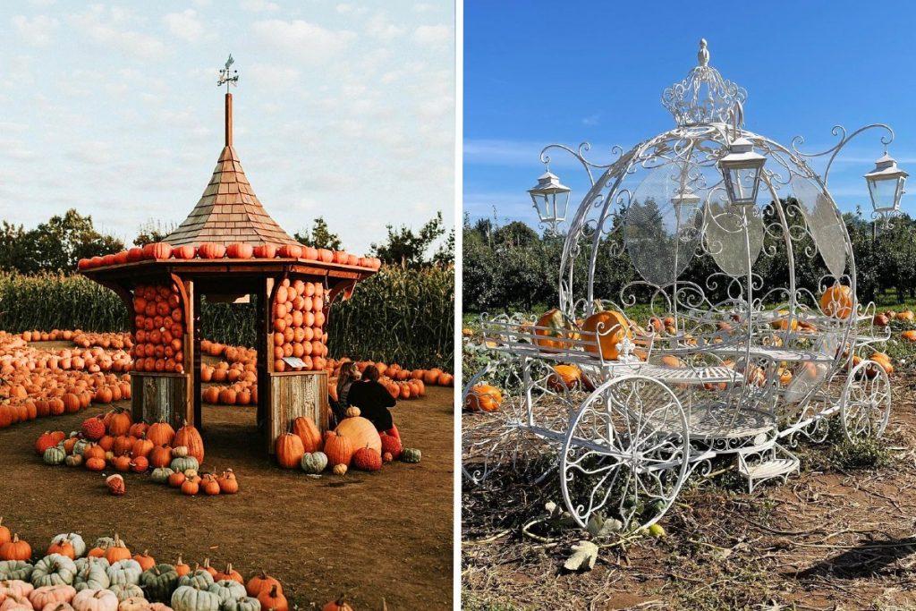 pumpkin patch abbotsford taves
