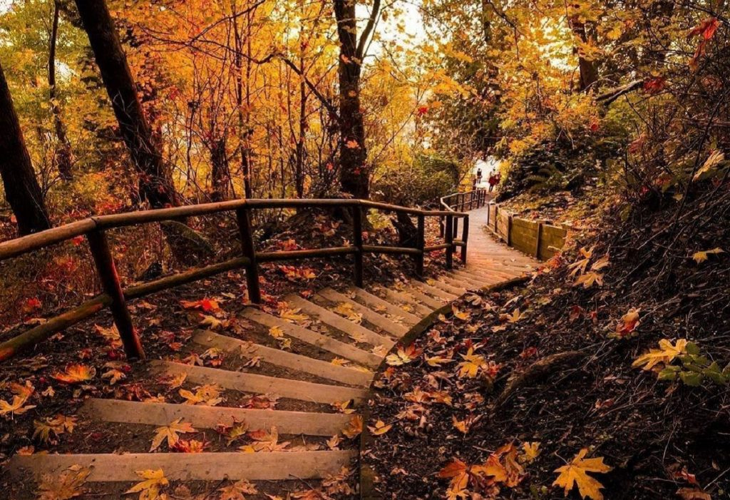 Staircase Trails In Metro Vancouver